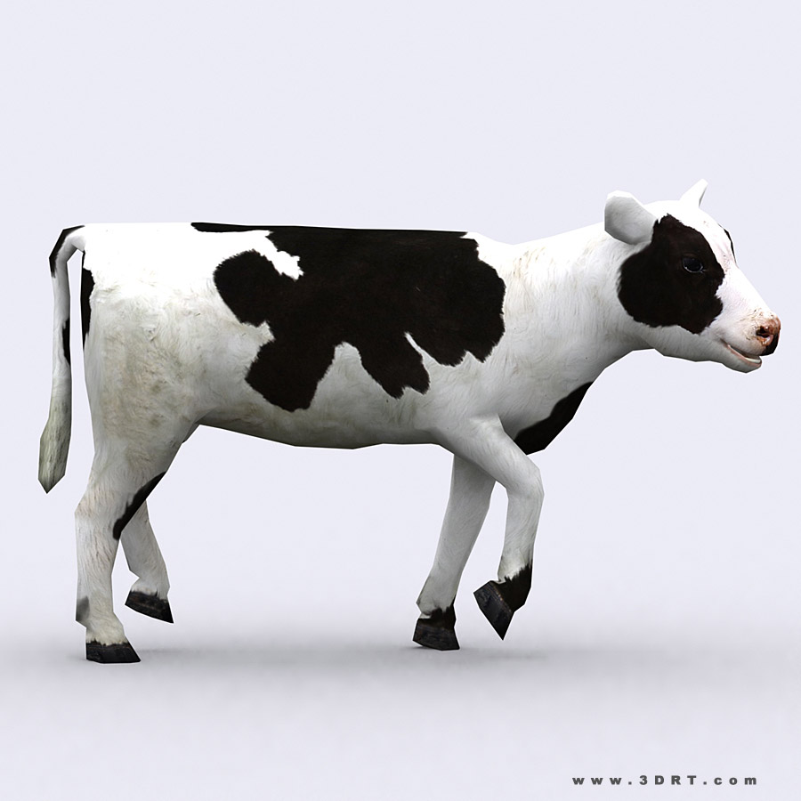 images of domestic animals cow - photo #23