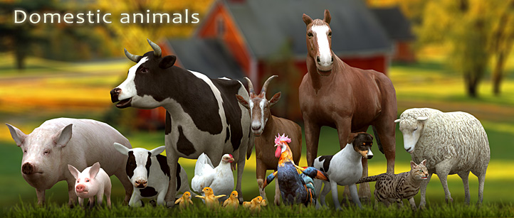 domestic animals horse cow dog cat sheep calf chicker rooster