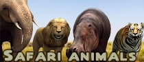 safari animals 3d lowpoly pack savana lion tiger zebra elephant crocodile